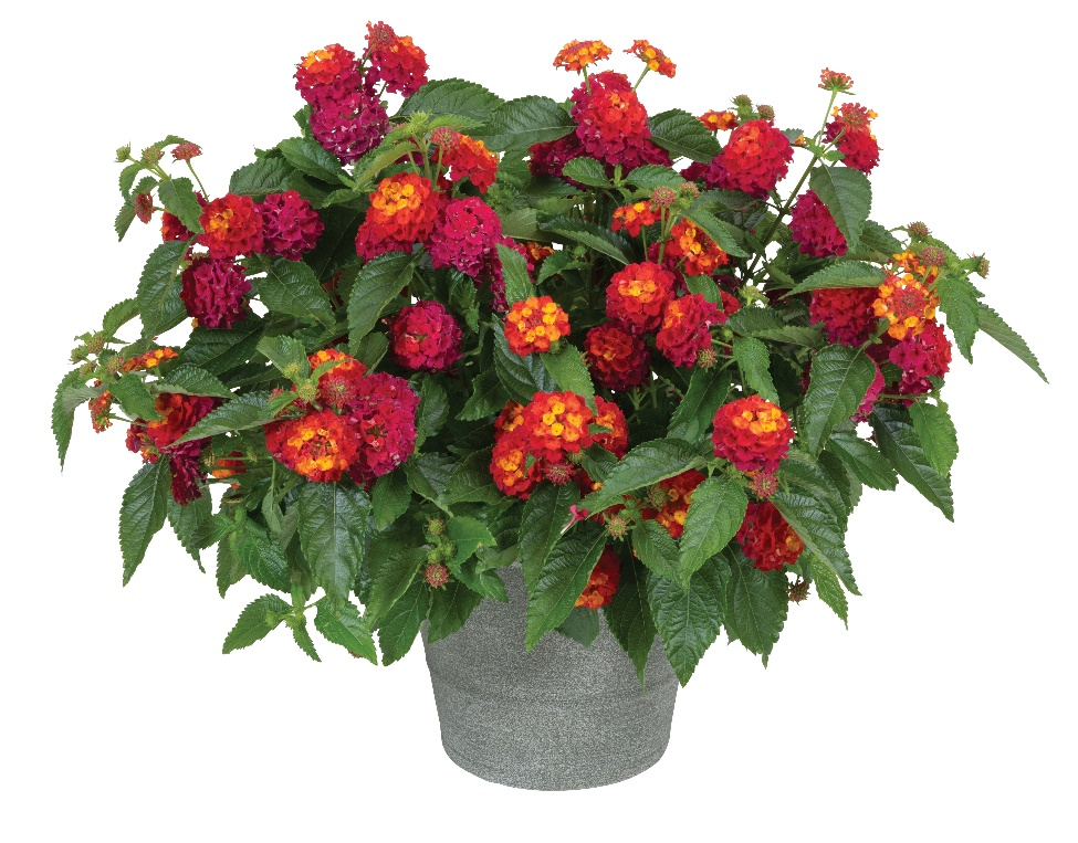 A vase with red flowers  Description automatically generated with low confidence