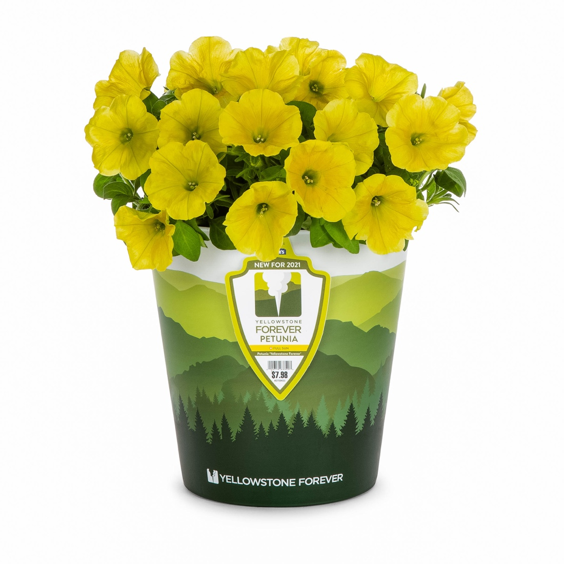 A vase with yellow flowers  Description automatically generated with medium confidence